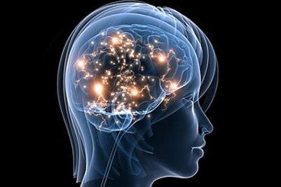 diagram-of-brain-04